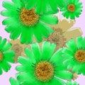 Marigold, calendula officinalis. Seamless pattern texture of flo