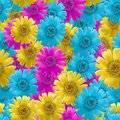 Marigold, calendula officinalis. Seamless pattern texture