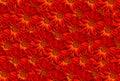 Marigold Calendula Red Pattern