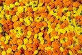 Marigold flowers garland background beautiful Royalty Free Stock Photography