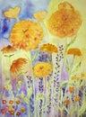 Marigold in a sunny field.
