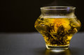 Marigold tea blooming and white Stock Photos