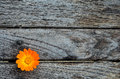 Marigold on wooden table empty grunge ready for text or product montage display Stock Image
