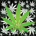 Marijuana background Stock Image
