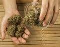 Marijuana close up of hands holding buds Stock Photos