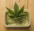 Marijuana green butter after finishing cooking Royalty Free Stock Photo