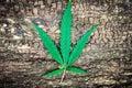 Marijuana leaf, cannabis on an old naturally Royalty Free Stock Photo