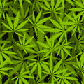 Marijuana leaves seamless vector pattern.