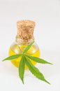 Marijuana plant and cannabis oil Royalty Free Stock Photo