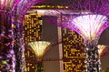 Marina bay sands supertrees at night with the at gardens by the in the foreground Royalty Free Stock Photography