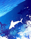 Marine background with a white shark Stock Photography