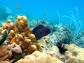 Marine biodiversity a giant murray in koh lipe thailand Royalty Free Stock Image