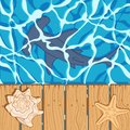 Marine color background with a shark hammer, shell and starfish. Summer vector background.
