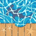 Marine color background with a shark hammer and starfish. Summer vector background.