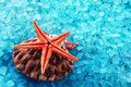 Marine composition big red seastar on a spotty clam shell over blue seasalt Stock Photo
