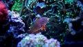 Marine Fish in Marine aquarium Royalty Free Stock Photo