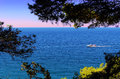 Marine landscape motor boat framed fir trees yalta crimea Stock Photography