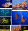Marine life Royalty Free Stock Photography
