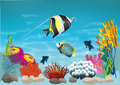Marine life with colorful fish Royalty Free Stock Photography