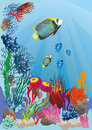 Marine life with colorful fish Stock Photo