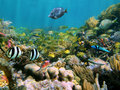 Marine life in a coral reef Royalty Free Stock Photography