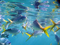 Marine Life under Great Barrier Reef Royalty Free Stock Photos