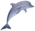 Marine mammal dolphin Royalty Free Stock Photo