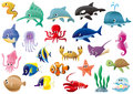 Marine organisms a variety of Stock Images