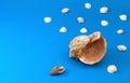 Marine shells useful as background sample Stock Photo