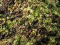 Marine sponge, porifera Royalty Free Stock Photo