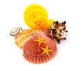 Marine still life. Royalty Free Stock Images