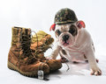 Marine Bulldog Royalty Free Stock Photo