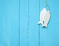 Maritime decorations on a bright blue wooden wall Stock Photography