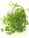 Marjoram in basket Stock Photos