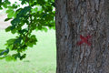 Marked tree with red paint Stock Photography