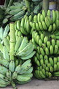 Market bananas taken in a in the dominican republic shows green and plantains Royalty Free Stock Images