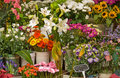 Market flower stall display. Stock Photography