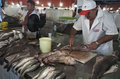 Market in manaus brazil men fishmonger cutting fish a Stock Photography