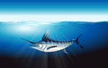 Marlin illustration of a in the sea Stock Photography