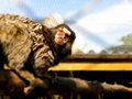 Marmoset monkey a close up view of a in captivity Royalty Free Stock Photos