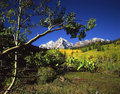 Maroon Bells & Aspen Branch Royalty Free Stock Image