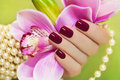 Maroon manicure on female hand with orchid and a pearl bracelet Stock Images