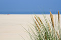 Marram grass at the seaside and a blue sky background Stock Images