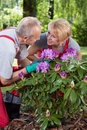 Married couple caring about flowers in garden Stock Image