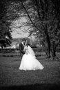 Married couple kissing under big oak newly Stock Photography
