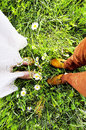 Married feet wedding on the green field with camomiles Stock Image