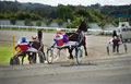 Marsa, Malta - June 5: horse race in Marsa, Malta on June 5, 2014 Royalty Free Stock Photo