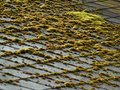 Marsh color moss on a roof Stock Image