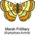 Marsh Fritilary Royalty Free Stock Photography