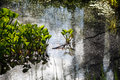 Marsh grass and water lilies glare Stock Photos